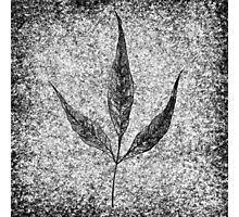 leaf 3 Photographic Print