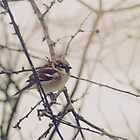 Winter Sparrow by Indea Vanmerllin