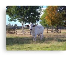 The Painted Longhorn Canvas Print