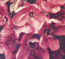Sakura by Indea Vanmerllin