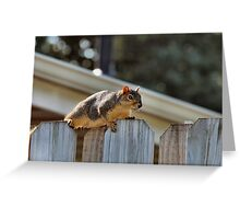 You can't sunbathe in a tree...the leaves are in the way! Greeting Card