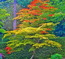 Fall Tree & Flowers, Butchart Gardens, BC by Thomas Barber