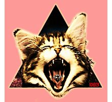 Kitten Triangle Photographic Print