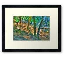Summer Woods, Santa Rosa, CA Framed Print