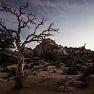 Desert Tree at Dusk - Joshua Tree N. P., CA by Mark Heller