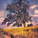 Lone Tree in Meadow by John Rivera