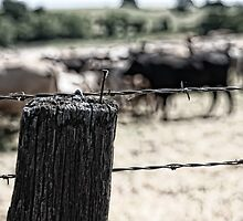 Herd of Cattle by randymir