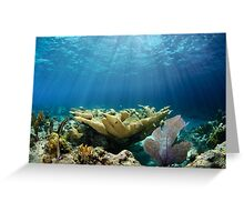Shallow Reef Greeting Card