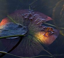 what lies beneath by Janet Gosselin