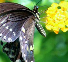 Butterfly Side View Sticker