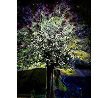 Oberon's Tree Photographic Print