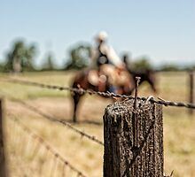 Fence Post by randymir