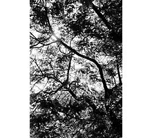 Branches through the light Photographic Print