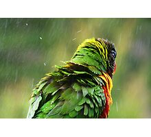 April Shower. Photographic Print