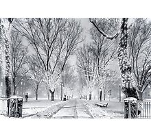 Snow's path down Comm Ave Photographic Print