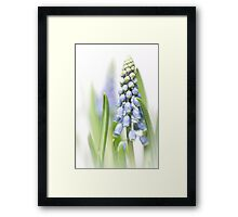 It's so nice to see them grow.... Framed Print
