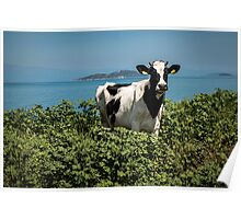 """Spotted Cow by the Sea """"Sea Cow"""" Poster"""