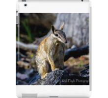 Dryandra Numbat iPad Case/Skin
