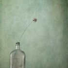 Just an old bottle and its cap by Priska Wettstein
