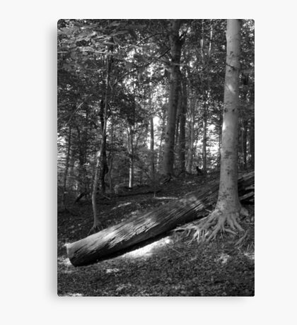 In the Woods B&W Canvas Print