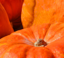 It's the Great Pumpkins... Sticker