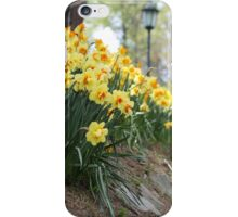 Yellow Daffodils on a Garden Pathway iPhone Case/Skin