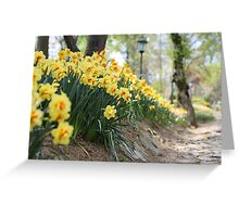 Yellow Daffodils on a Garden Pathway Greeting Card