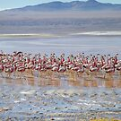Flamingo city by DianaC