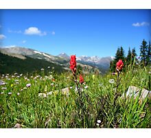 Colorado Flowers Photographic Print