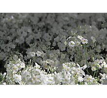 sea of white Photographic Print