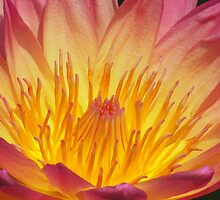 Fiery Radiance by shutterbug2010