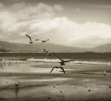 Taking flight - Desaturated by JacobCarder