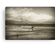 Taking flight - Desaturated Canvas Print
