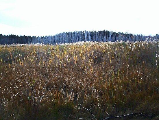 Cedar Fringe by RVogler
