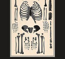 Bones and The Bone Table by RulerOfNothing