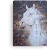 Habib Shael -- Akhal Teke Stallion Canvas Print