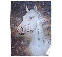 Habib Shael -- Akhal Teke Stallion Poster