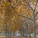 Autumn Walk in the Park by DPalmer