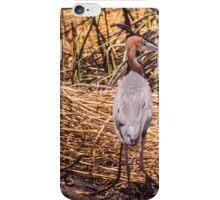 Purple Heron in Grass iPhone Case/Skin