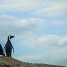 Penguins of Simons Town (2) by Tim Cowley