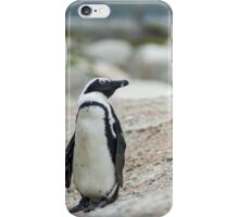 Penguins of Simons Town (4) iPhone Case/Skin