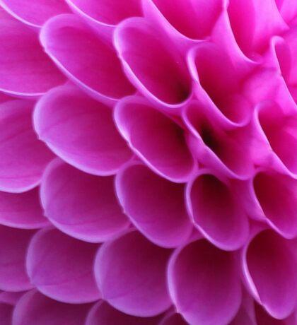 Pink Puzzle Sticker