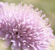 Lilac Flower Romantic Macro Photograph by MaureenAstrid