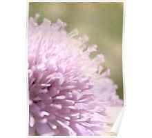 Lilac Flower Romantic Macro Photograph Poster