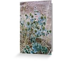 Sea Holly Greeting Card