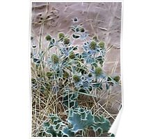 Sea Holly Poster