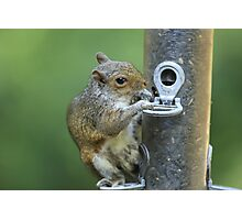 Squirrel Eating From Feeder Photographic Print