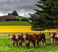 Farmers Pride by Sandra Anderson