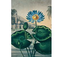 The Blue Egyptian Water Lily Photographic Print