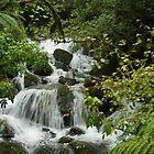 Wilderness New Zealand by Sandra  Sengstock-Miller